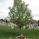 Memorial-Tree-1