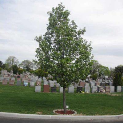 Memorial-Tree-2